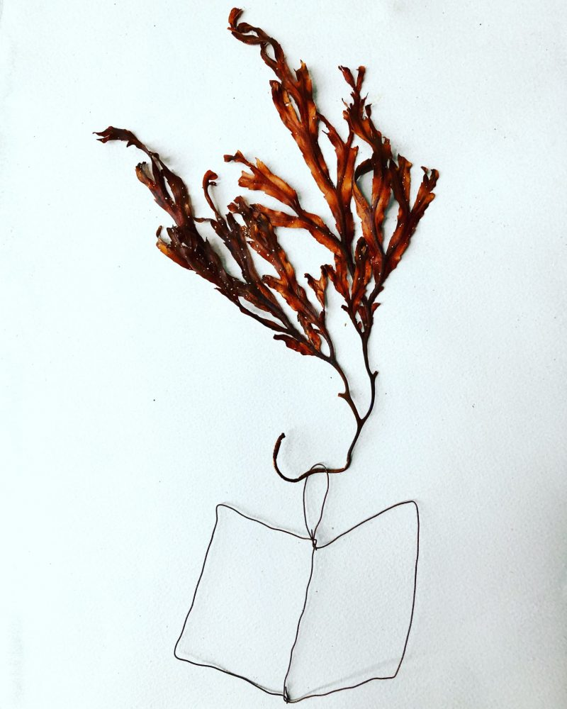 Island bookart: Wire and seaweed. Rachel Hazell. Island isolation: Creative lockdown.