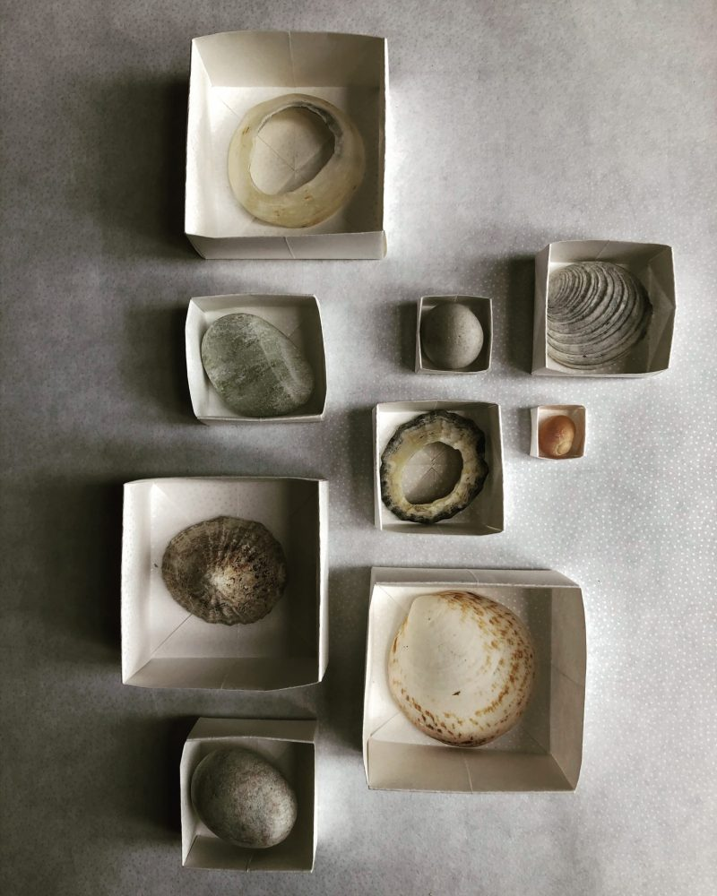 Shell collection, Origami boxes, Rachel Hazell. Island isolation: Creative lockdown.
